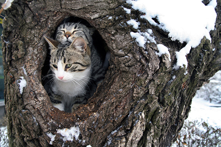 Cats found to eat more in the winter - News - University ...