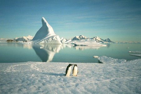Rothera penguins