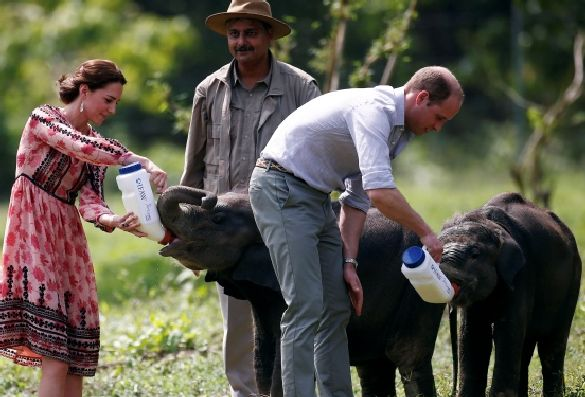 Royals in India