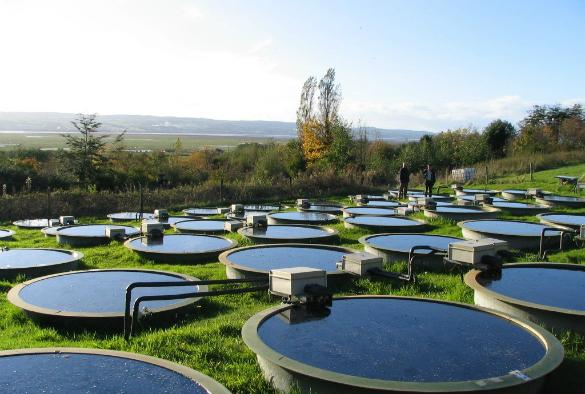 Experimental ponds at Ness Botanic Gardens