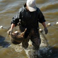 Fish farming 5