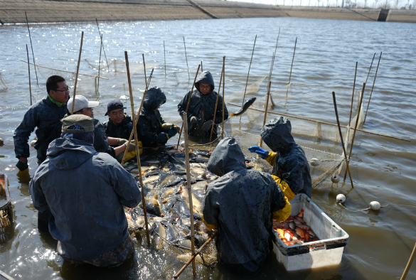 Sampling fish in China