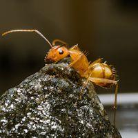 ants_h