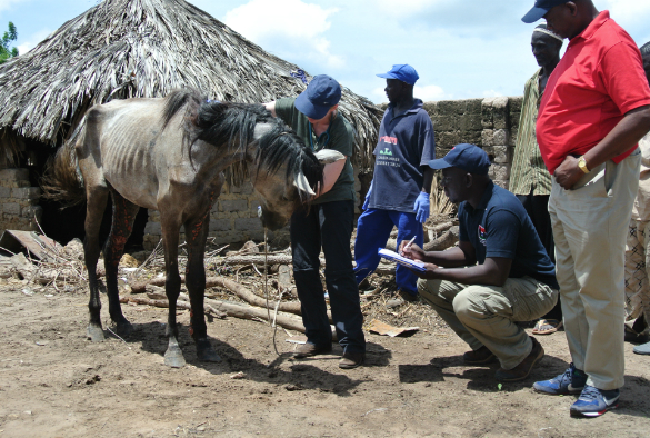 Assessing a sick horse in The Gambia