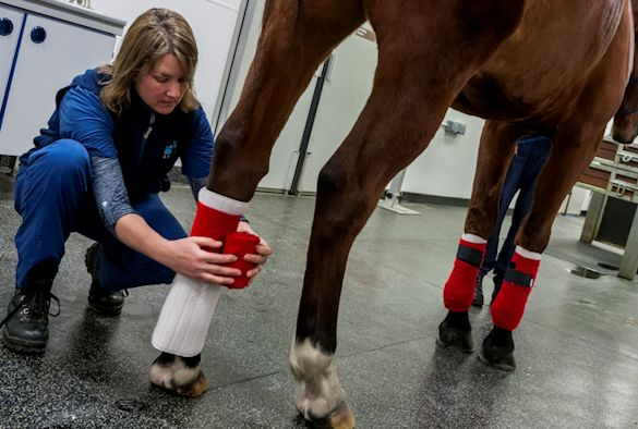 Equine Hospital - University of Liverpool