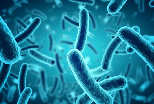 Image result for pathogens