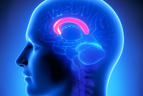 psychology research articles on schizophrenia About the journal schizophrenia bulletin seeks to review recent developments and empirically based hypotheses proquest psychology journals.