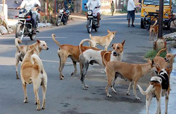 dogsIndia-1w