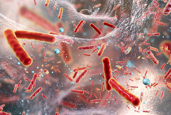 boost for multidrug resistant bacteria antibiotic research
