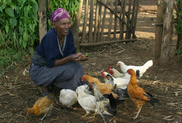 Ethopian villager with her chickens