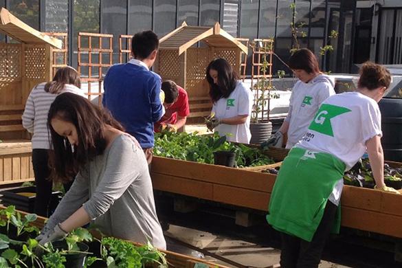 Green Guild Roof Garden