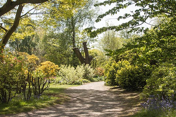 Ness Gardens view